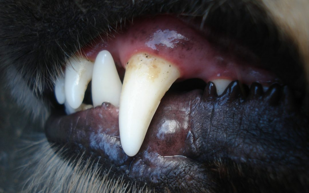How healthy are your pet's teeth?