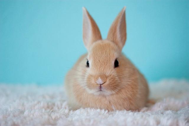 Rabbit Awareness Month