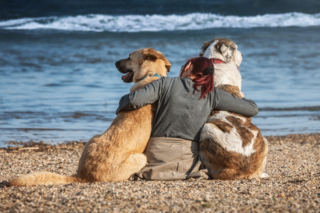 Top 5 Tips For Keeping Your Pet Safe This Summer