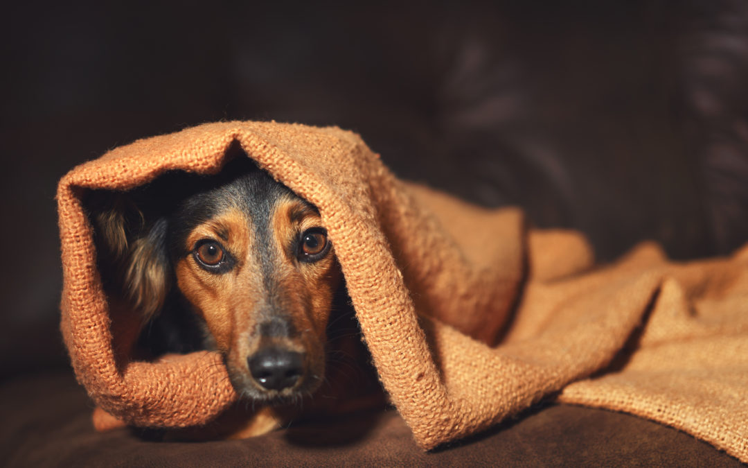 Does your pet suffer from Firework Fears?
