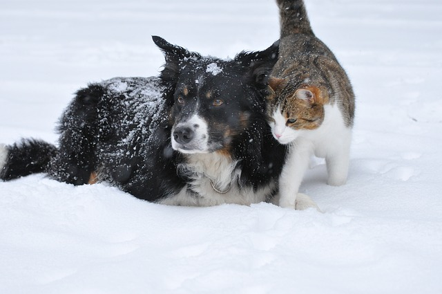 Senior Pets – Top Tips for Winter