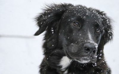 Winter woofs – a survival guide