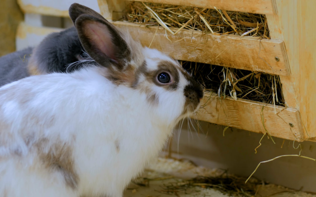 What's wrong with selective feeding for rabbits?