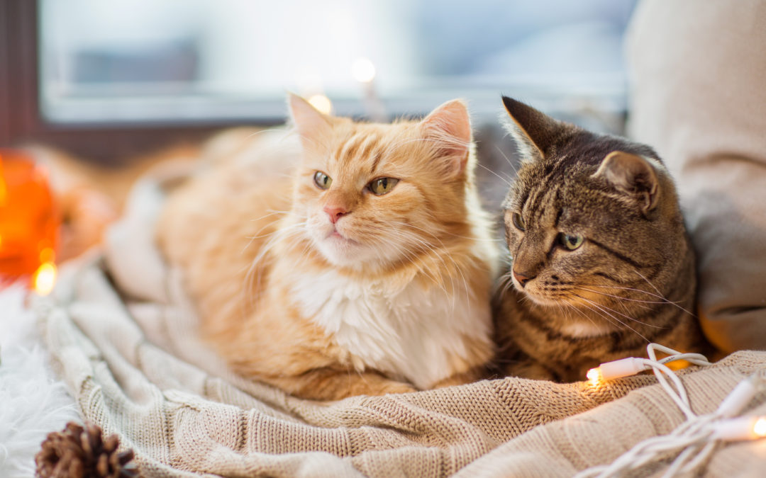 Keeping Your Kitties content in multi-cat households